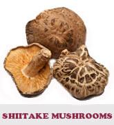 shiitake-thmb